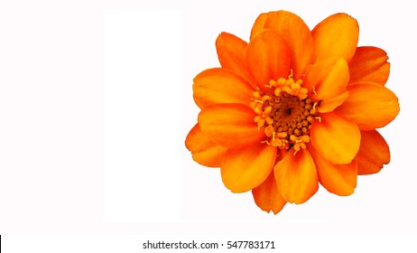 Pink and orange flowers images stock photos vectors shutterstock orange flower on white background mightylinksfo
