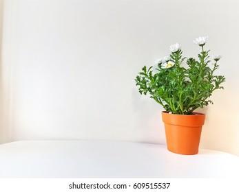 Orange flower pot and White flower