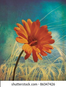 An orange flower set over golden wheat with a grunge style effect set on a portrait format.