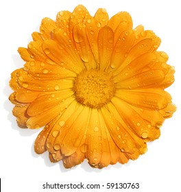 Orange flower with water drops isolated on white