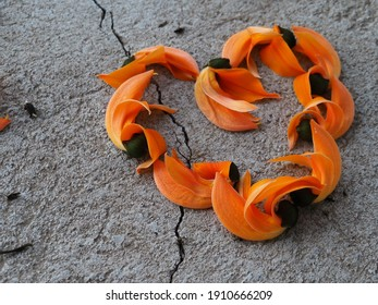 Orange flowers arranged in a heart shape on the cement floor, Bastard teak, Bengal Kino, Kino tree, Flame of the forest.