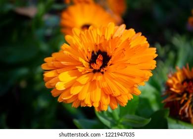 orange flowers blooming