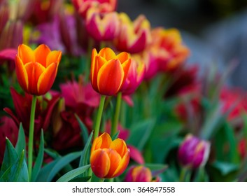 Orange flowers with blurred flowers in the background