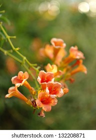 Orange Flowers with Bokeh Background