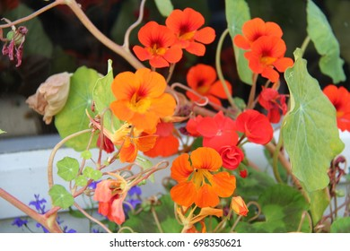 Orange flowers in close up