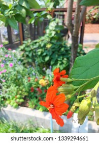Orange flowers with a garden background.