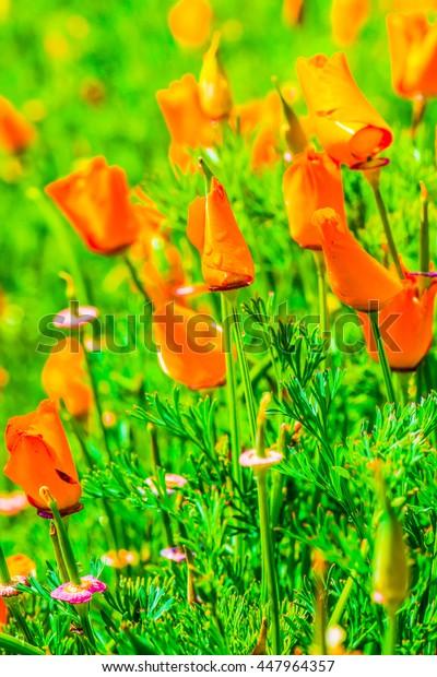 Orange flowers in garden, Thailand