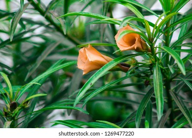Orange flowers of a green plant