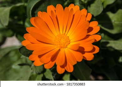 Orange flowers in the middle of the wildflower meadow