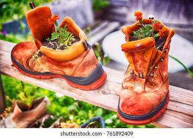 orange flowers planted in two old orange boots
