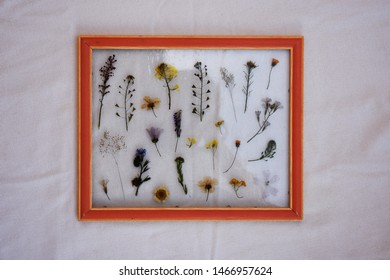 Orange frame with dissected flowers