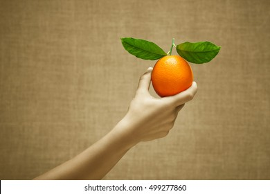 Orange fruit in female hand on burlap background. Cultivation, selection, stands out from the crowd concept. Sepia and color series.