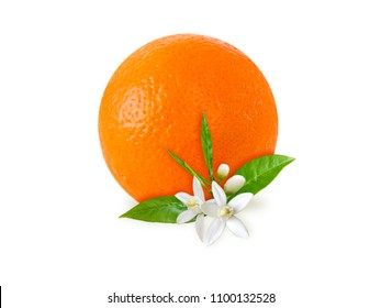 Orange fruit, flowers and leaves isolated on white