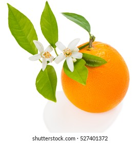 Orange fruit with green leaves, blossom and buds  isolated on white background