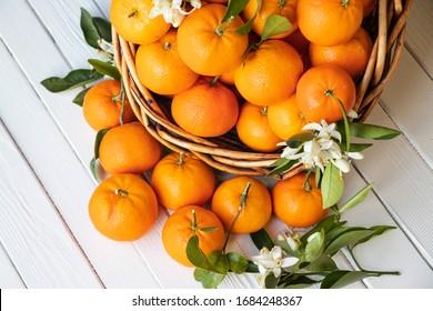 Orange fruit with green leaves on the white wood.  Home gardening. Mandarine oranges. Tangerine  oranges. Orange blossoms flowers  images.