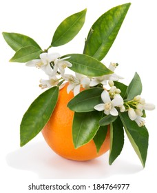 Orange fruit with leaves and blossom isolated on a white background