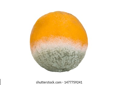 Orange fruit in process of decomposing. Isolated on white.