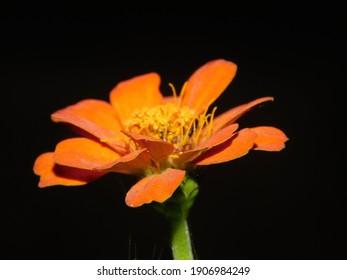 黒い背景にオレンジの花