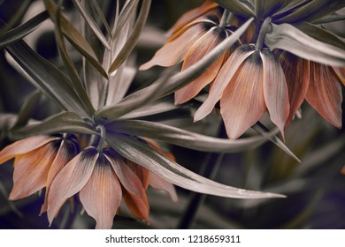 orange garden flowers, view from the top, abstract colors.