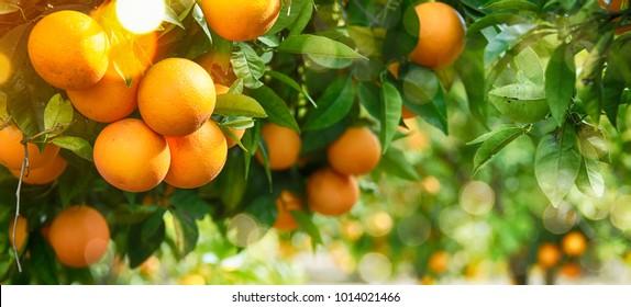 Orange Garden Images, Stock Photos & Vectors | Shutterstock