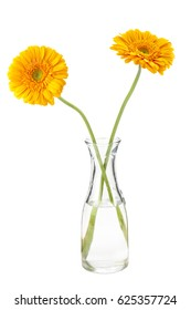 Orange Gerbera daisies in a clear glass vase  isolated on white