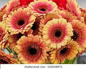 Orange gerbera daisy bouquet closeup
