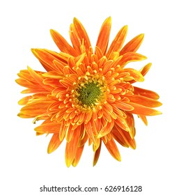 Orange Gerbera flower with clipping path on white background.