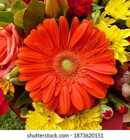 Orange gerbera flower in posy