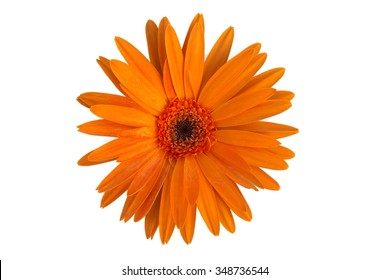 Orange gerbera flower top view isolated on white background