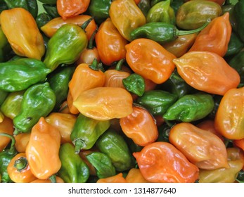 Orange and Green Habanero Peppers