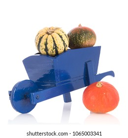 Orange and green pumpkins in blue wheel barrow isolated over white background