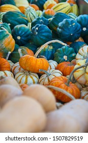 Orange and Green Pumpkins - Display Pumpkin Patch