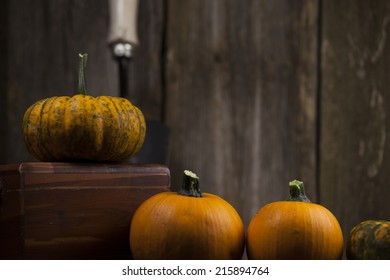 Orange and green pumpkins with garden shovel and rustic background.
