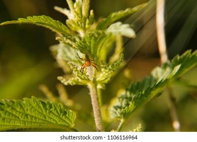 Orange green spider detail
