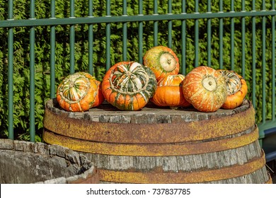 Orange, Green, And White Fall Pumpkin Gourd on a rain barrel