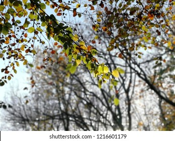 Orange green and yellow leaves on foreground branch with autumn trees in background.
