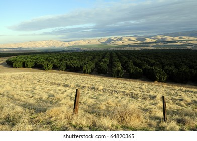 Orange groves against the Sierra Nevada Range in the Southern San Joaquin Valley, California