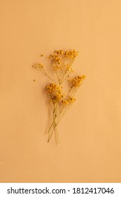 Orange gypsophilia paniculata branches (Baby's breath) on soft creamy brown background with copy space for text
