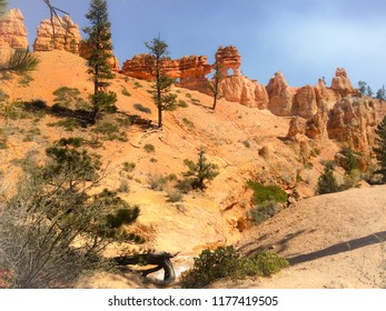 Orange Hoodoos with 6 arches found in Bryce Canyon National Park at Tropic Ditch along the Mossy Cave Trail in Utah USA