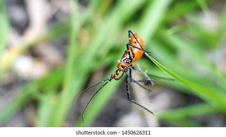 Orange katydid nymph in the grass in Cotacachi, Ecuador