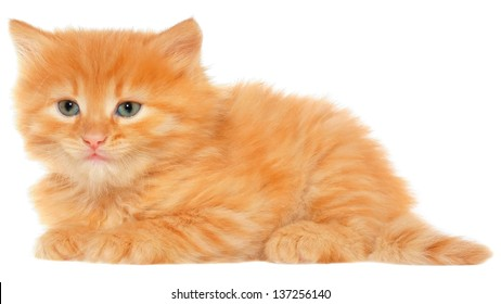 Orange kitten lays on a side view isolated on white background.