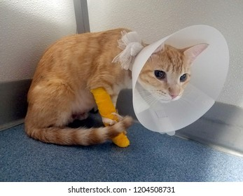 orange kitten with medical cone and bandaged leg with line for IV