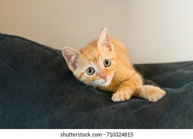 Orange Kitten on Couch
