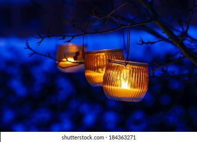 Orange lantern hanging on a branch
