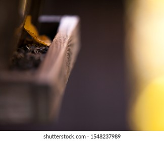 Orange Leaf among Sunflower Seeds in Hanging Man-made Bird-Feeding House with Creamy Smooth Blurred  in Background - Wood Texture
