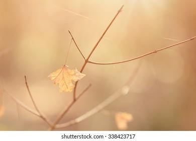 Orange Leaf in Forest Photo