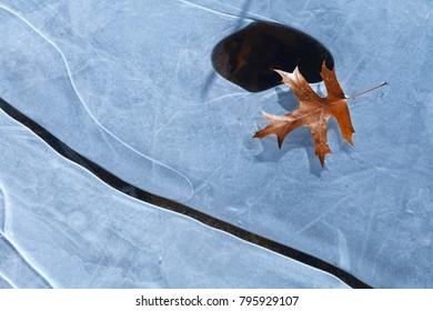 Orange Leaf on Ice