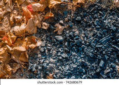 orange leaves with coal after the bonfire on the  ground