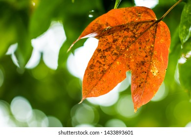 Orange leaves on a green leaf background and bokeh light