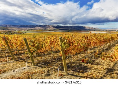 Orange Leaves Vines Rows Grapes Wine Colorful Fields Autumn Red Mountain Benton City Washington